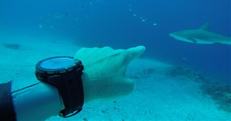EDOX 超鯊限量潛水錶  Sharkman I